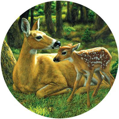 doe and fawn oil painting by wildlife artist Crista Forest, ForestWildlifeArt.com. Fine Art Prints available